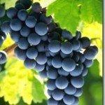 Dieta e uva