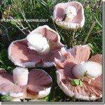 A dieta con i funghi champignon